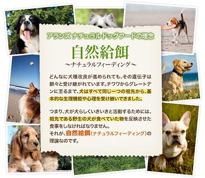 愛犬のために、無添加、品質にこだわる方にオススメのペットフード「アランズ」口コミ